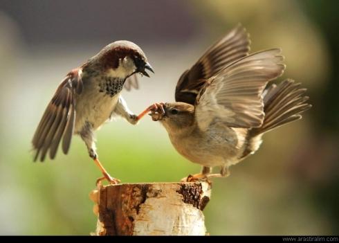 Ağzını Kapatmak