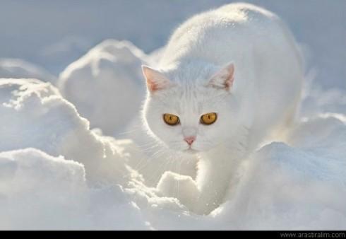 Karla Karışık Kedi x