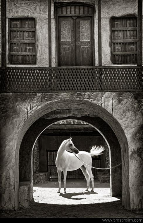 Arabian Gate