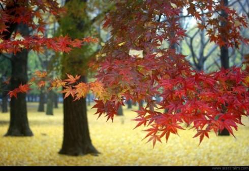 Autumn Tint x