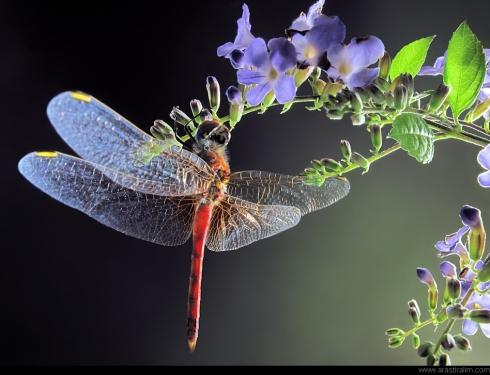 ciçek Özü