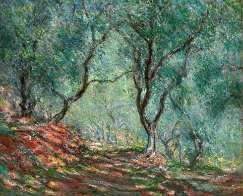 Claude Monet Paintings Olive Tree Wood in the Moreno Garden jpg
